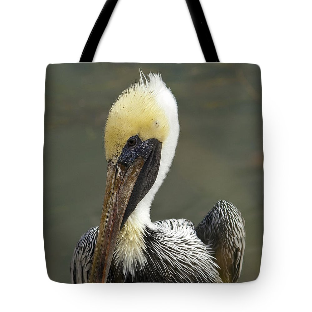 Pelican Tote Bag featuring the photograph Wary Brown Pelican by Allan Hughes