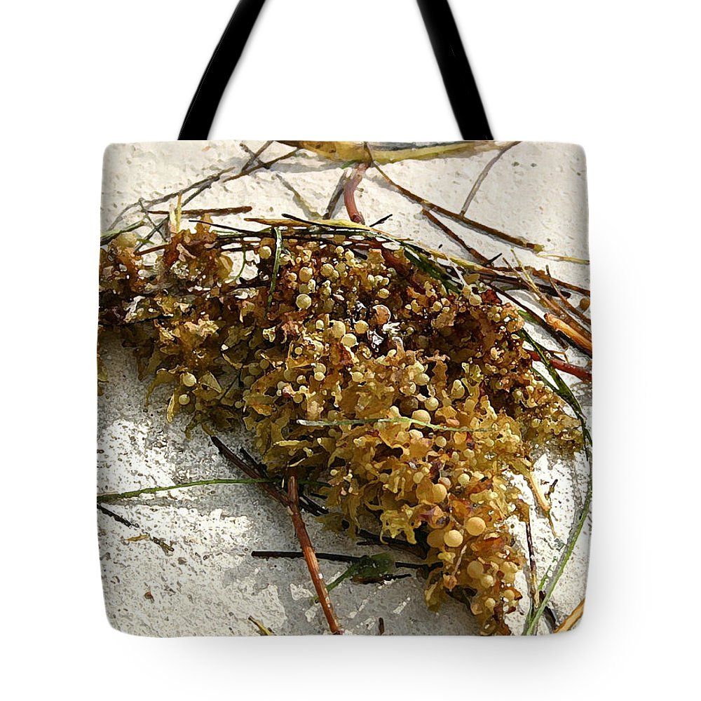 Seaweed Tote Bag featuring the photograph Washed Ashore by Mary Haber