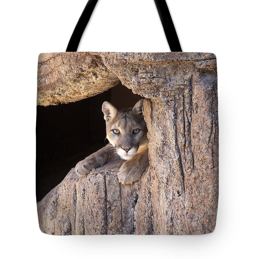 Cougar Tote Bag featuring the photograph Watchful Eyes by Sandra Bronstein
