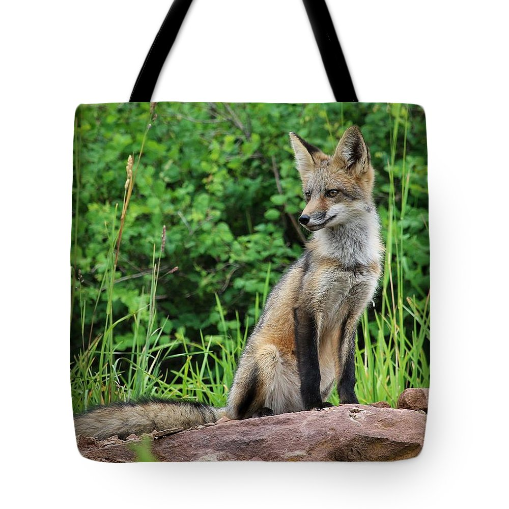 Fox Tote Bag featuring the photograph Watchful by LeAnne Perry