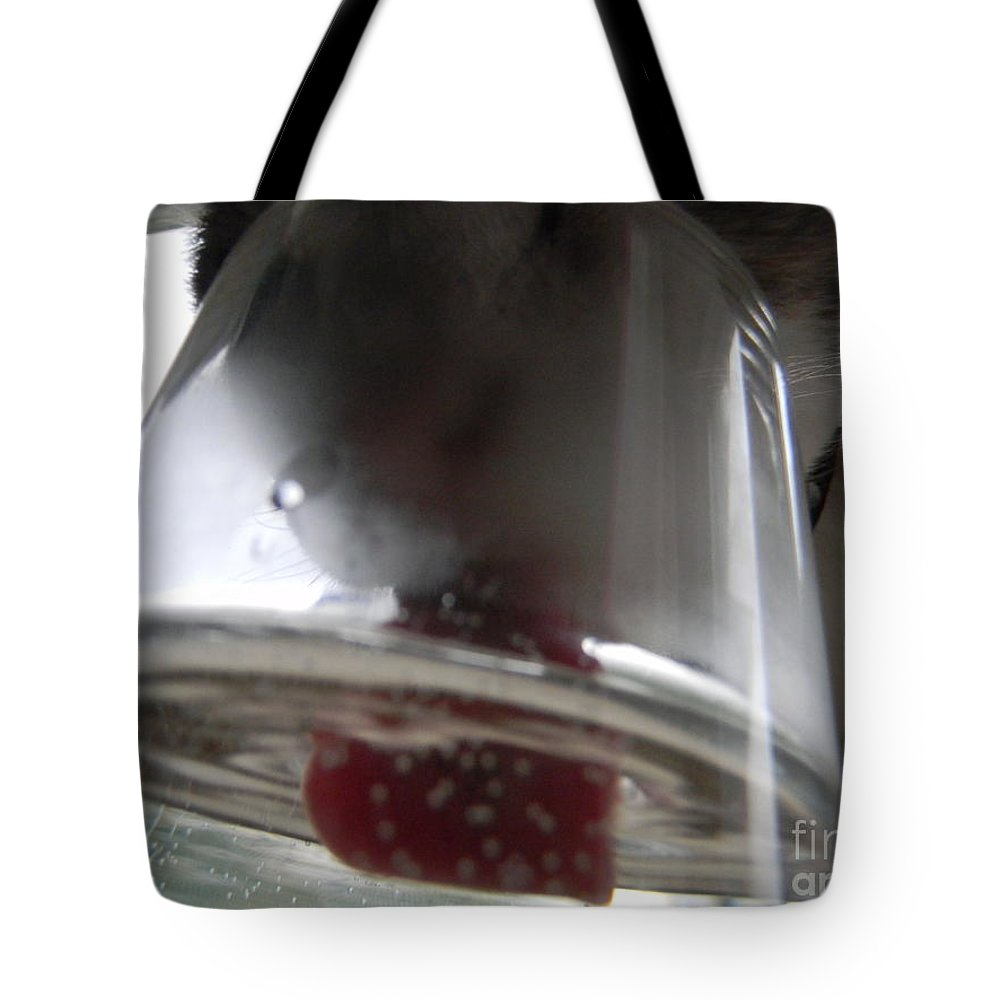 Cat Tote Bag featuring the photograph New View by Allie Kneidl-Peppers