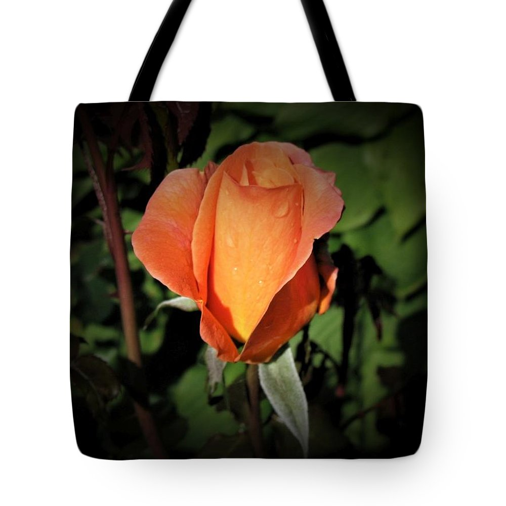 Water Tote Bag featuring the photograph Water Beads On Orange Rose by GinA Captured Images of Maine