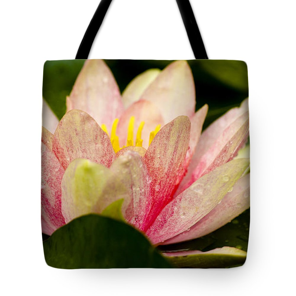 J Paul Getty Tote Bag featuring the photograph Water Lilly At Eye Level by Teresa Mucha
