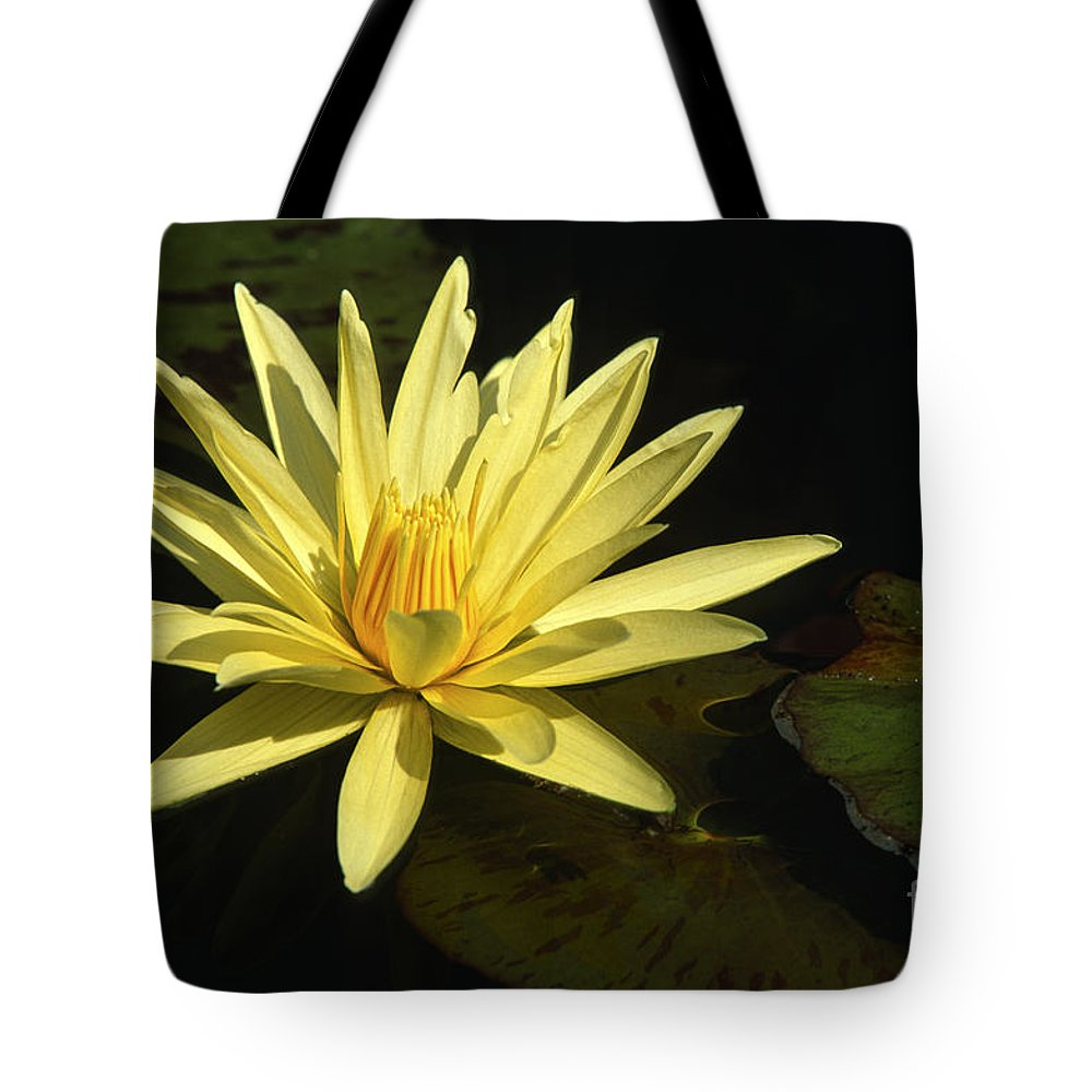 Flowers Tote Bag featuring the photograph Water Lily by Sandra Bronstein