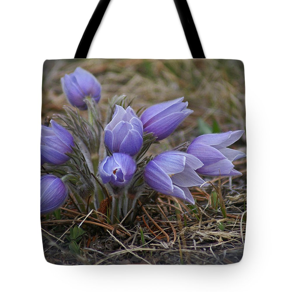 Pasque Flower Tote Bag featuring the photograph Watercolor Pasque Flowers by Heather Coen