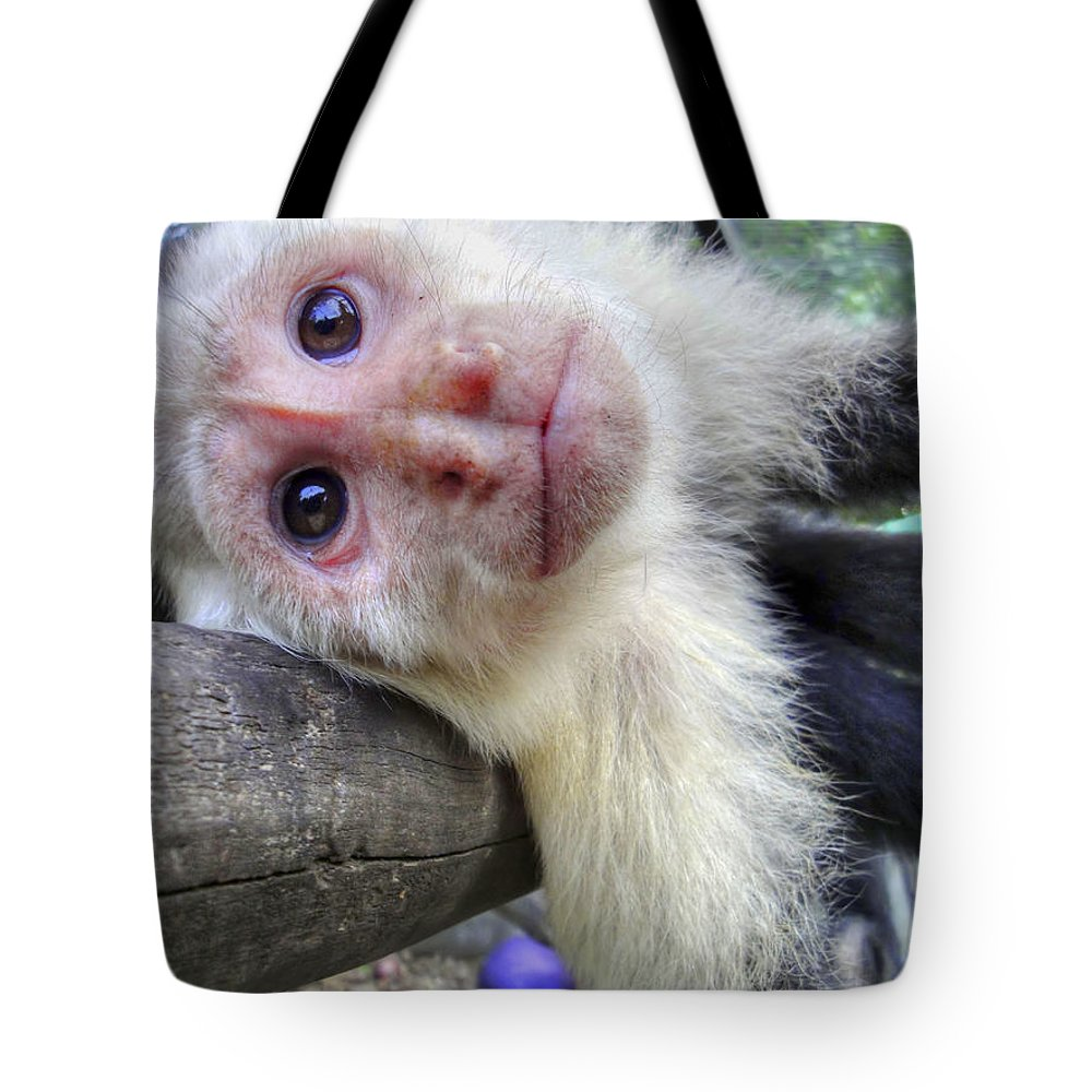 Capuchin Monkey Tote Bag featuring the photograph Welcome To Paradise Gardens by Dolly Sanchez
