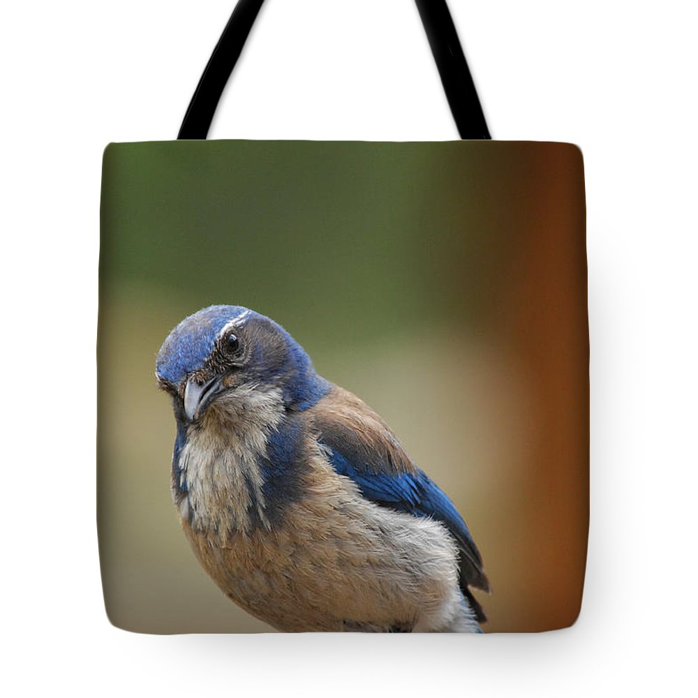 Mountain Blue Bird Tote Bag featuring the photograph Well Hello Beautiful by Donna Blackhall