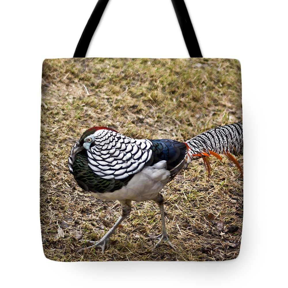 Black Tote Bag featuring the photograph Well Plumed Bird by Douglas Barnett