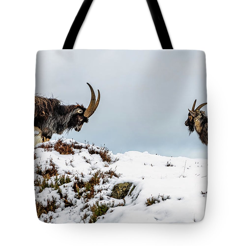 Mountain Goat Lifestyle Products