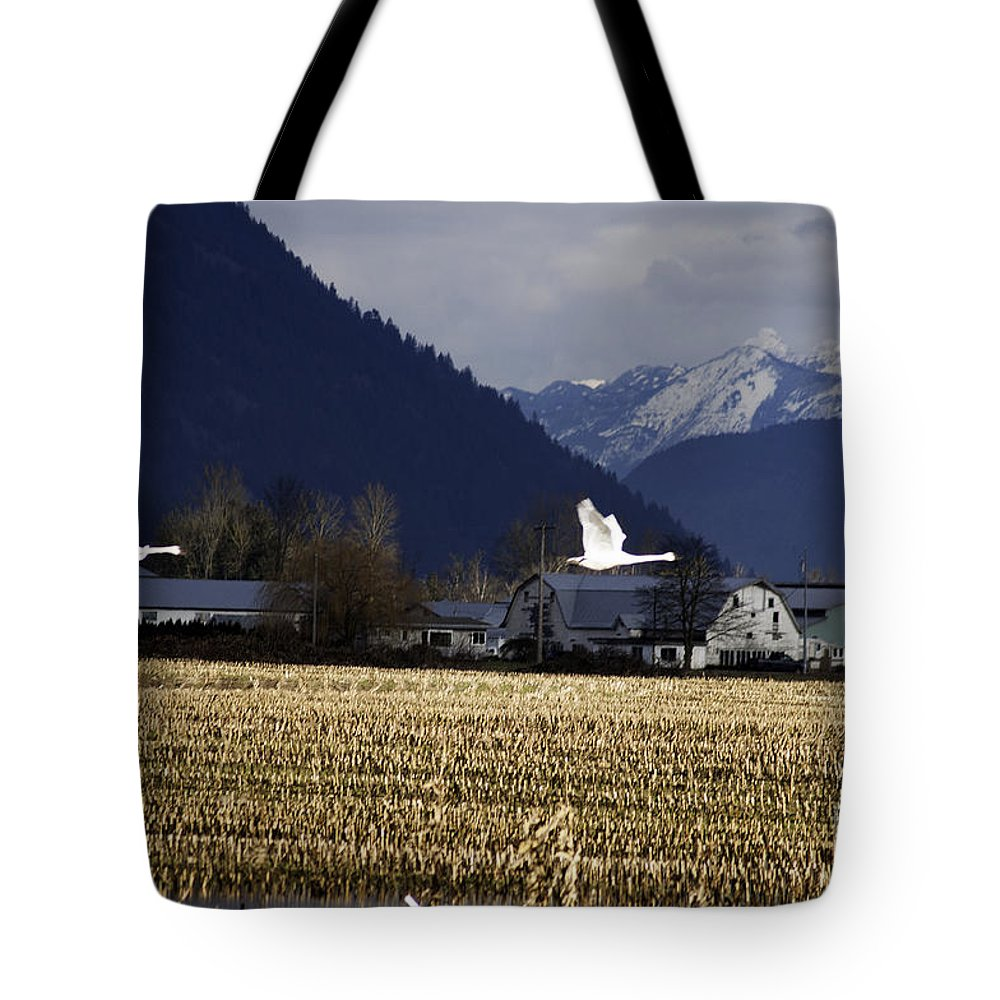Art Tote Bag featuring the photograph Were Outa Here by Clayton Bruster