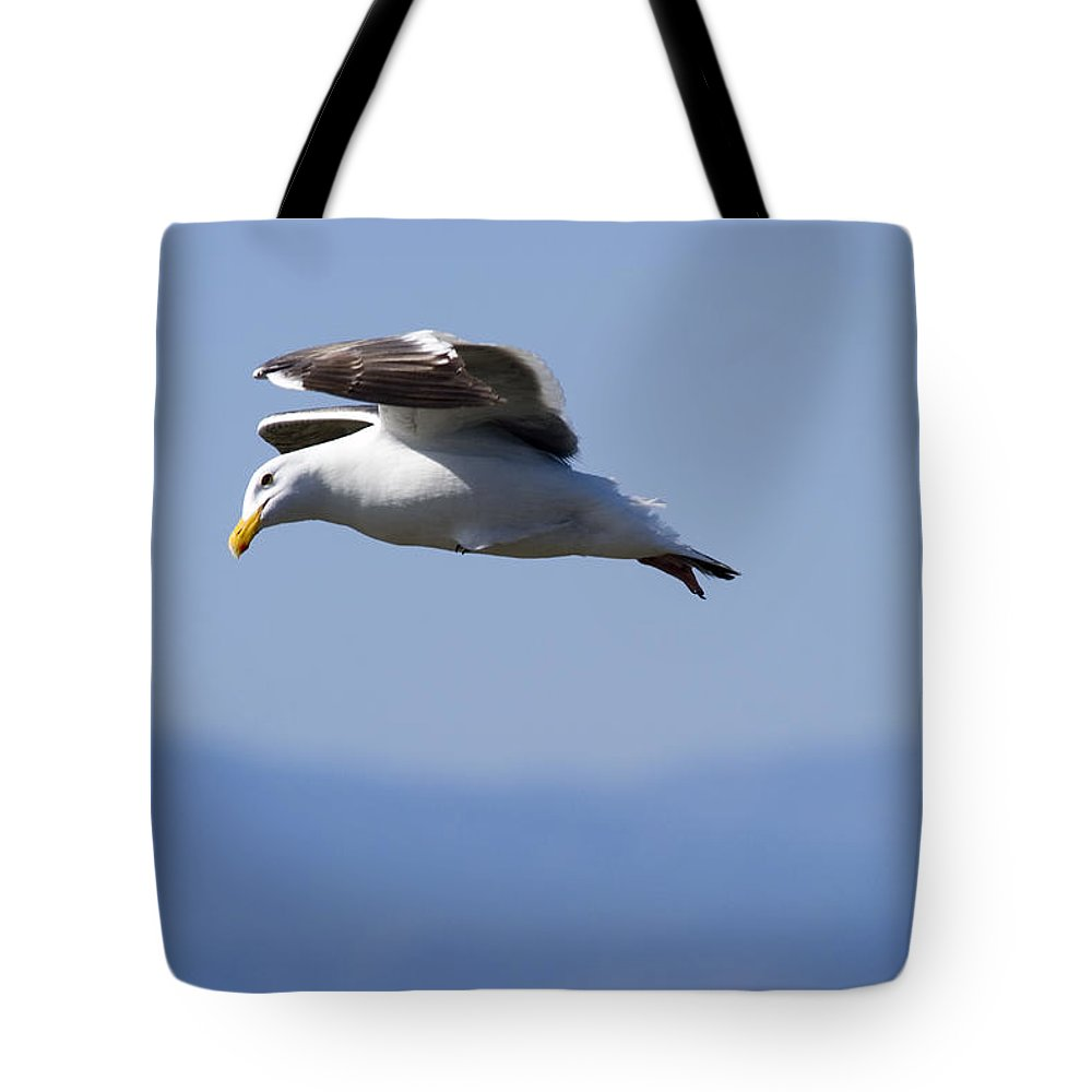 One Animal Tote Bag featuring the photograph Western Gulls Larus Occidentalis Flying by Rich Reid