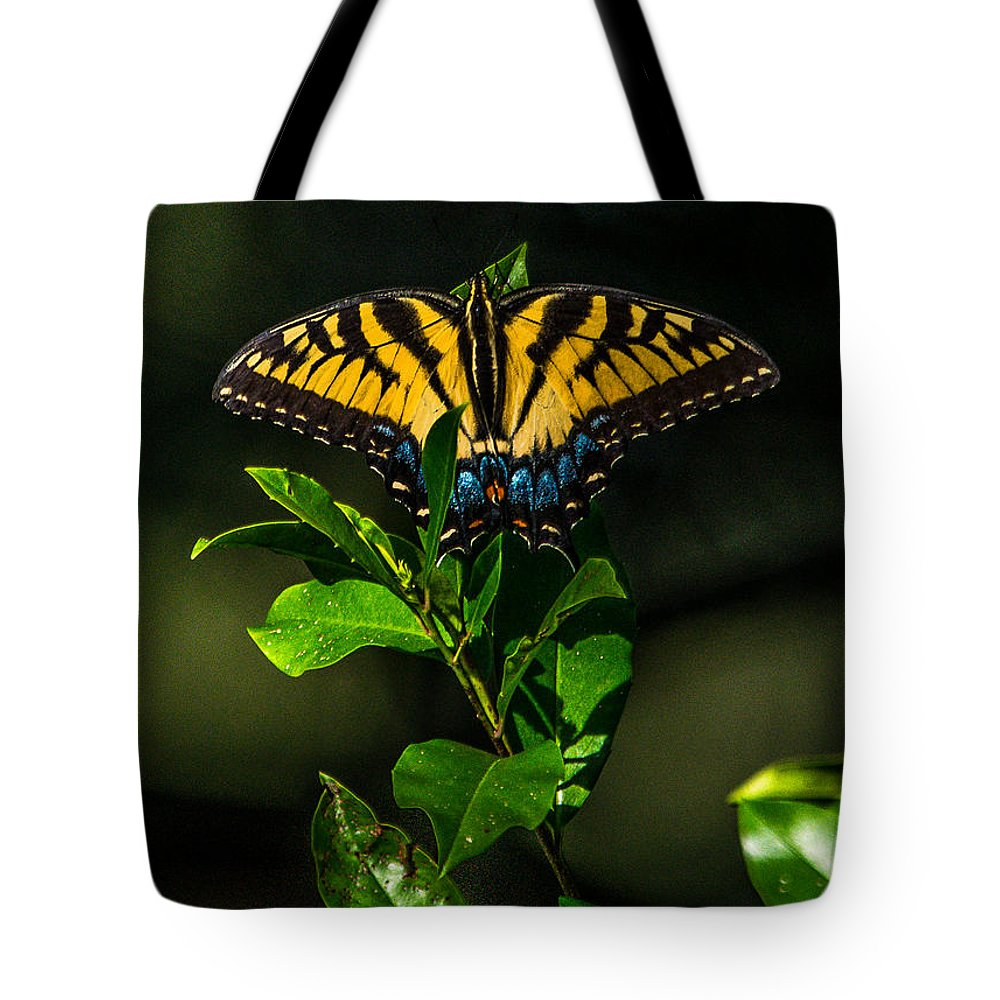 Nature Tote Bag featuring the photograph Western Tiger Swallowtail by Alicia Collins