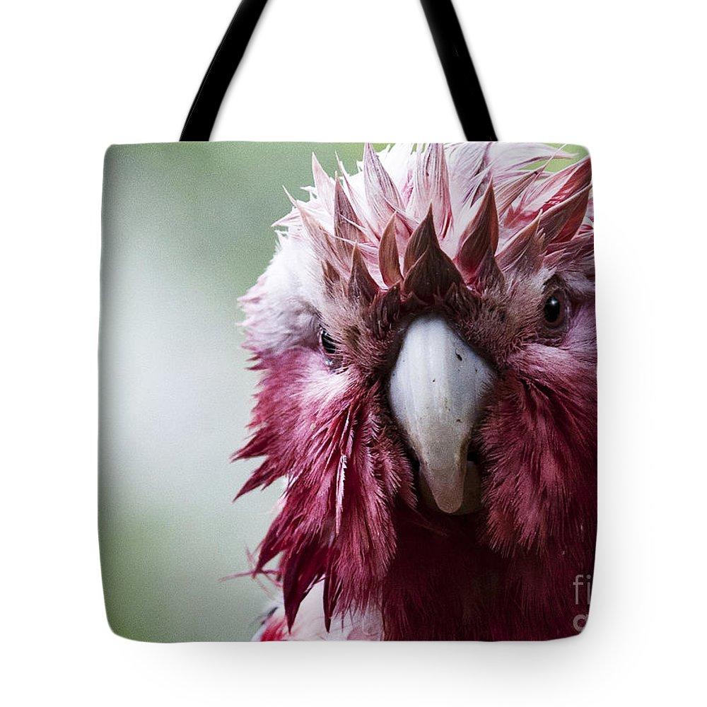 Galah Tote Bag featuring the photograph Wet Galah by Sheila Smart Fine Art Photography