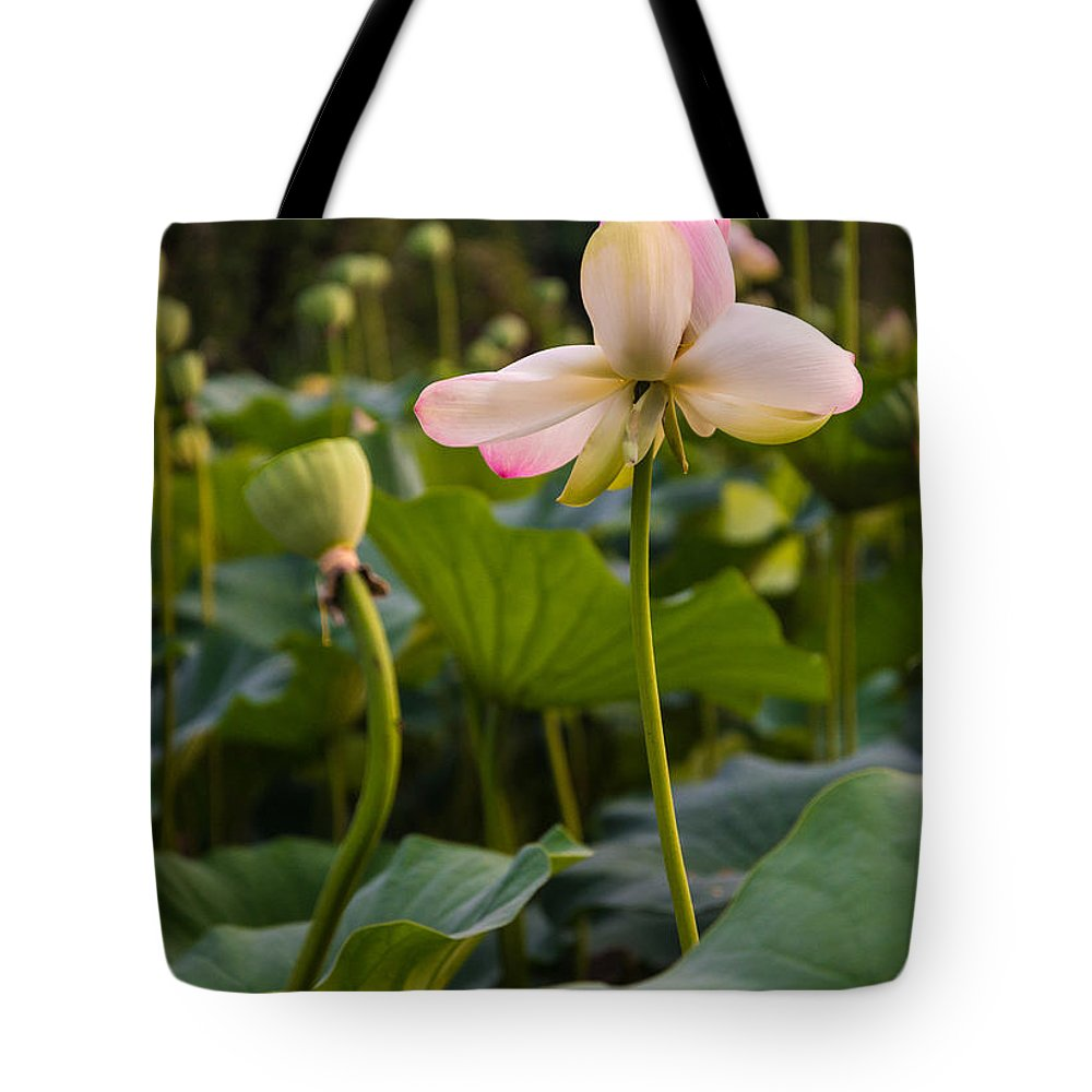 Flower Tote Bag featuring the photograph Wetland Flowers by Kristopher Schoenleber