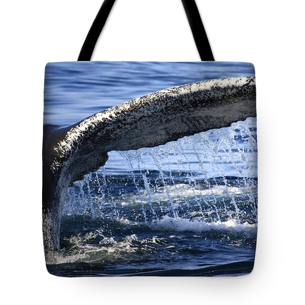 Whale Tail Tote Bag featuring the photograph Whale Tail by Dapixara Art