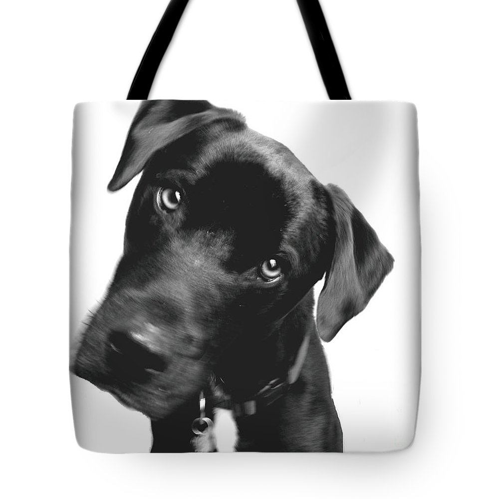 Labrador Tote Bag featuring the photograph What by Amanda Barcon