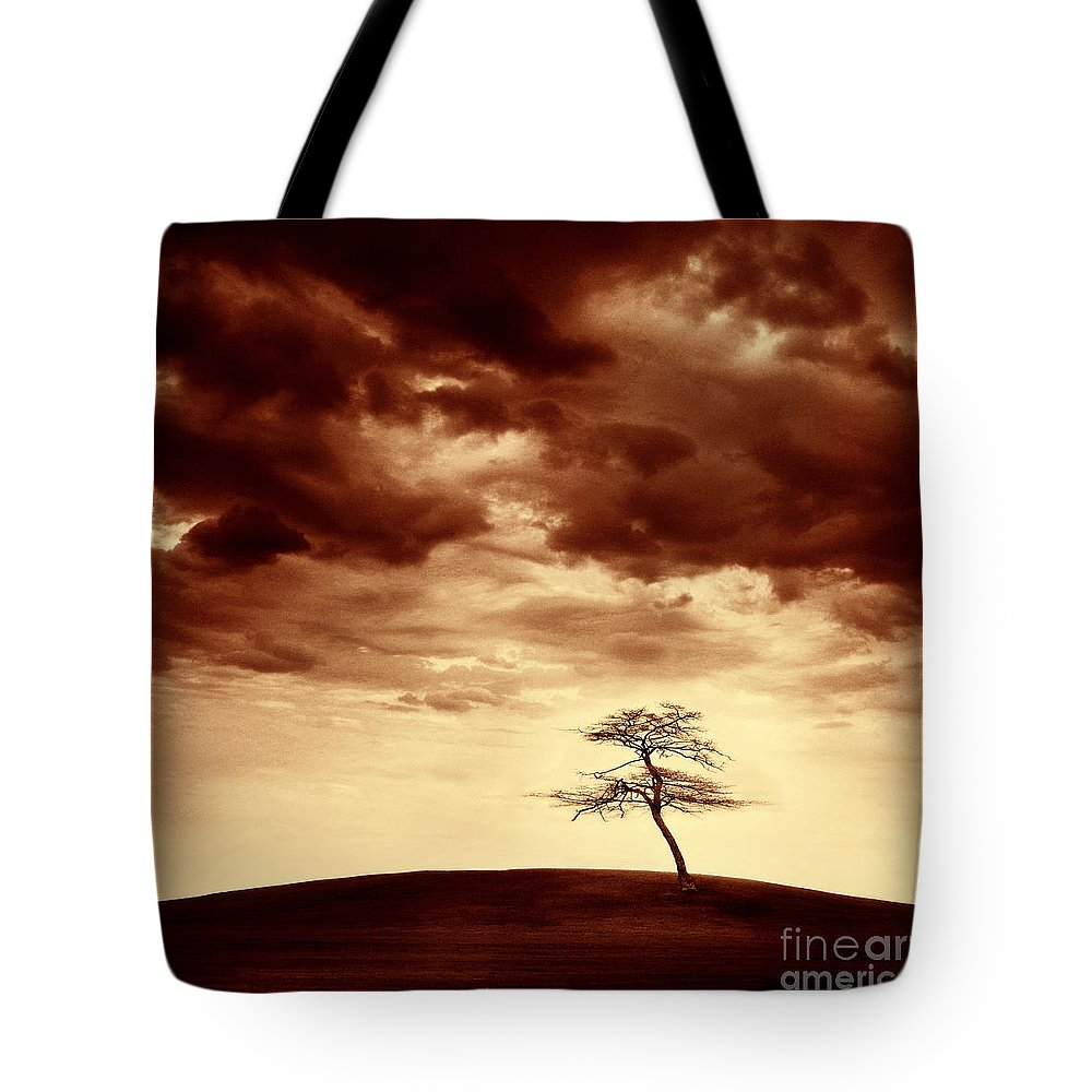 Tree Tote Bag featuring the photograph What Will Be The Legacy by Dana DiPasquale