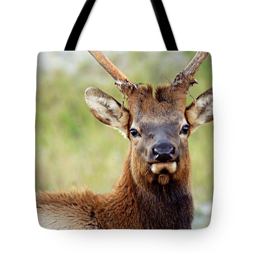 Bull Elk Tote Bag featuring the photograph Whatcha Looking At by Larry Ricker