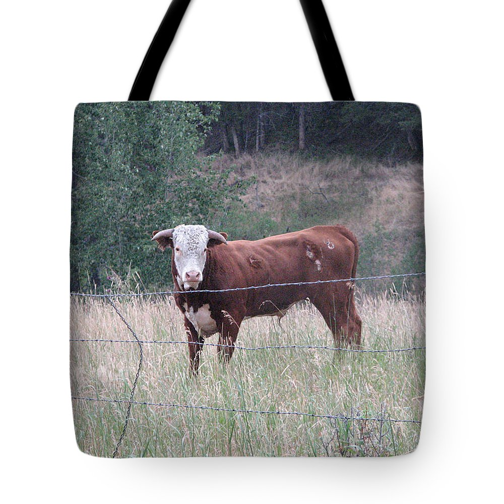 Bull Tote Bag featuring the photograph Whatchu Lookin At by Stacey May