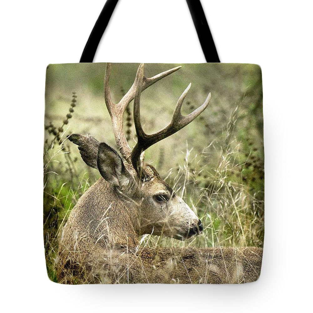 California Scenes Tote Bag featuring the photograph Whats The Point by Norman Andrus