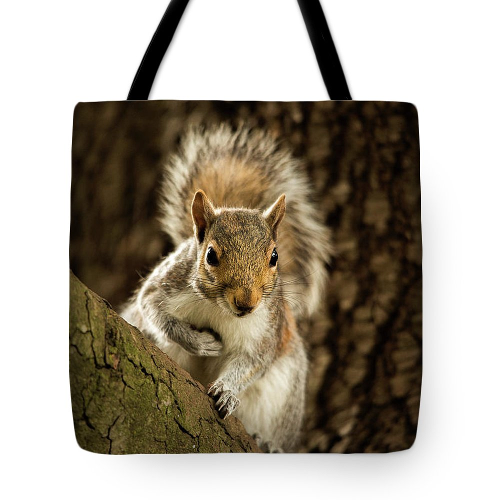 Animal Tote Bag featuring the photograph What's Up? by Bob Cournoyer