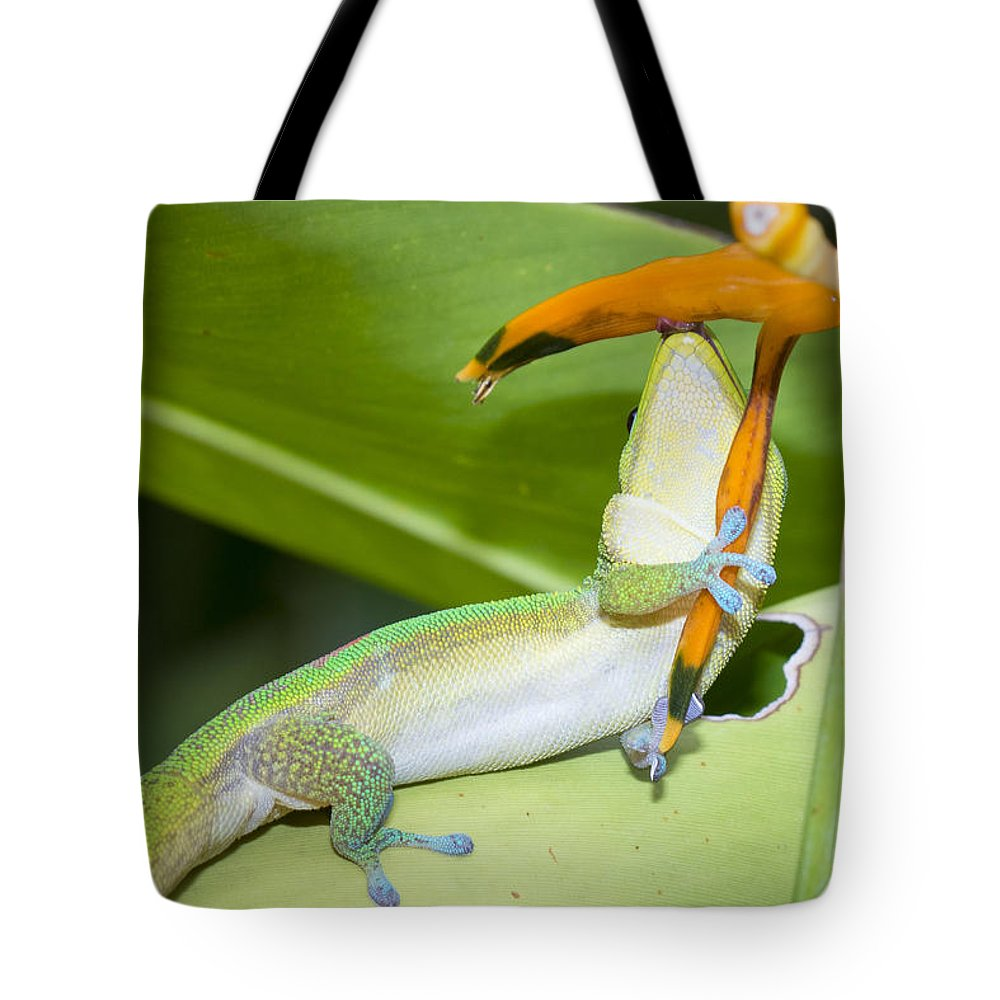 Big Island Tote Bag featuring the photograph When You Love Something...this Much by Windy Corduroy