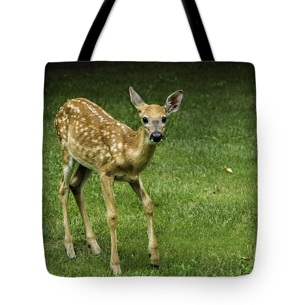 Animals Tote Bag featuring the photograph Where Is Mom by Timothy Hacker
