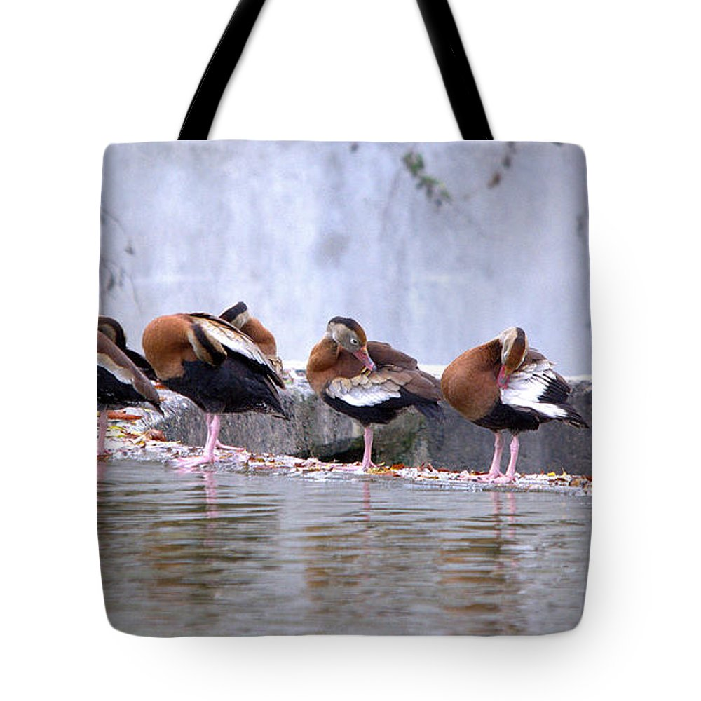 Roy Williams Tote Bag featuring the photograph Whistling Ducks Grooming by Roy Williams