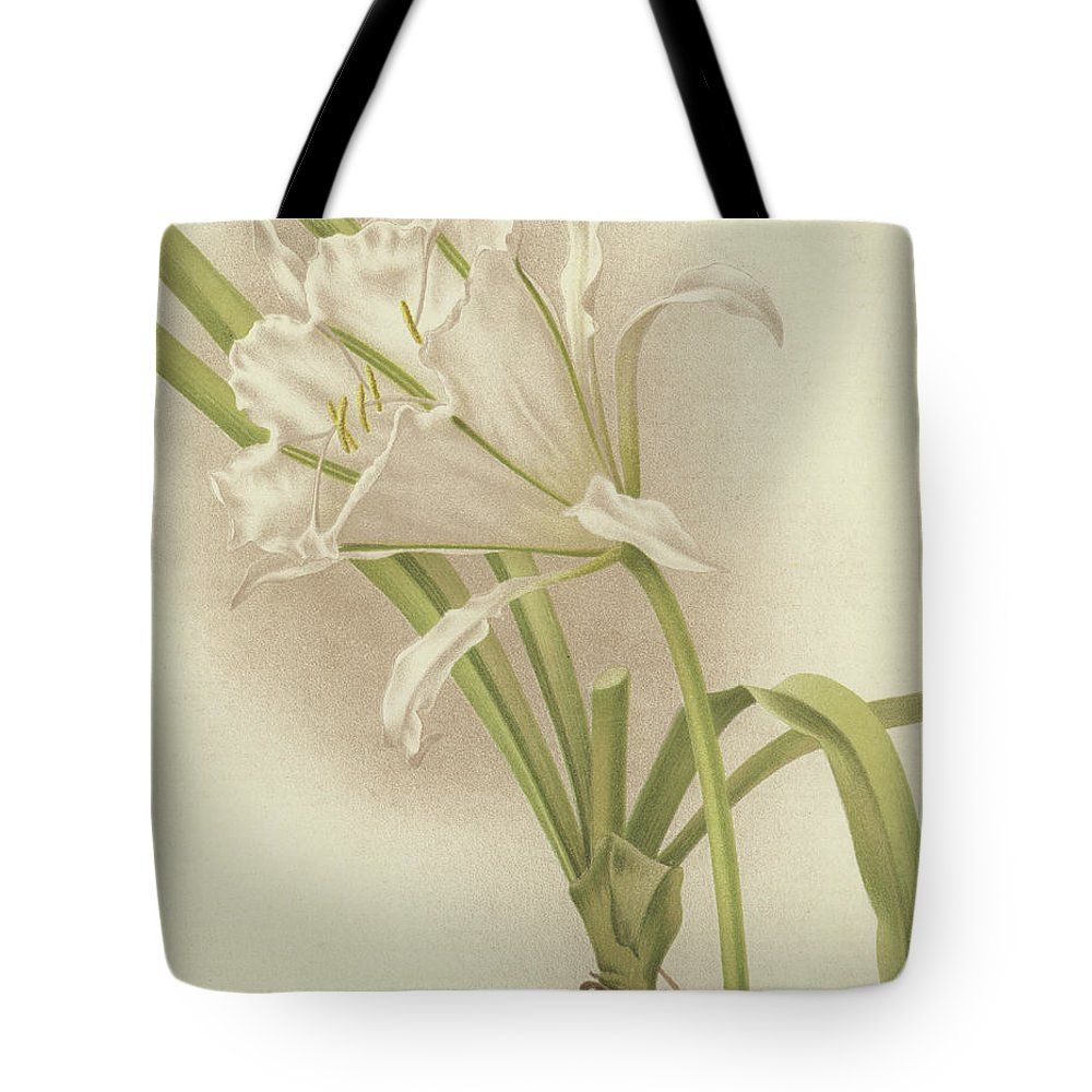Amaryllis Tote Bag featuring the painting White Amaryllis  Ismene Andreana by English School