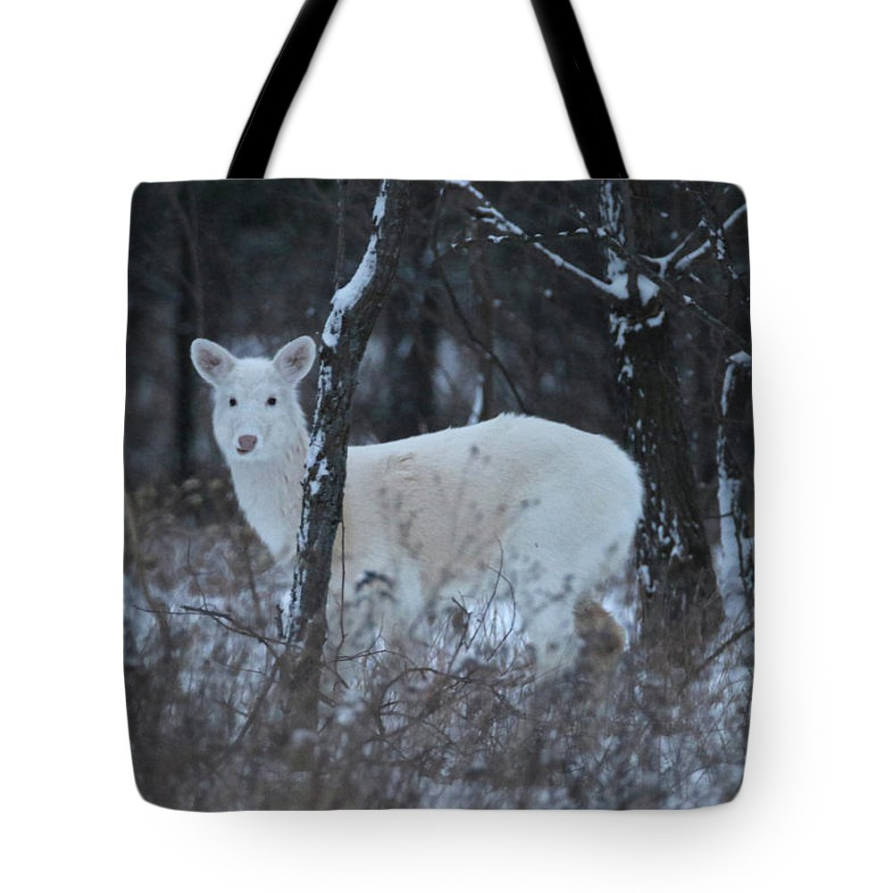 Tote Bag featuring the photograph White Deer In Winter by Brook Burling