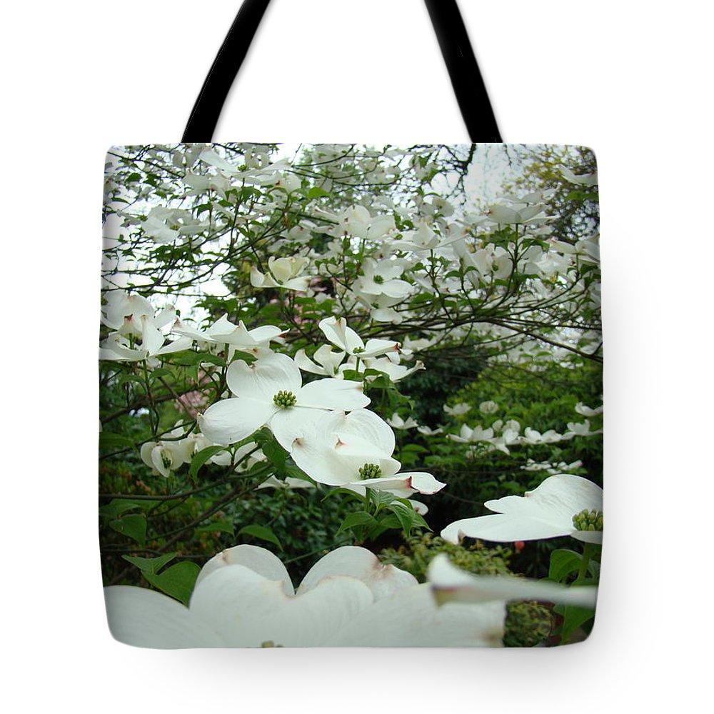 White Dogwood Flowers 6 Dogwood Tree Flowers Art Prints Baslee