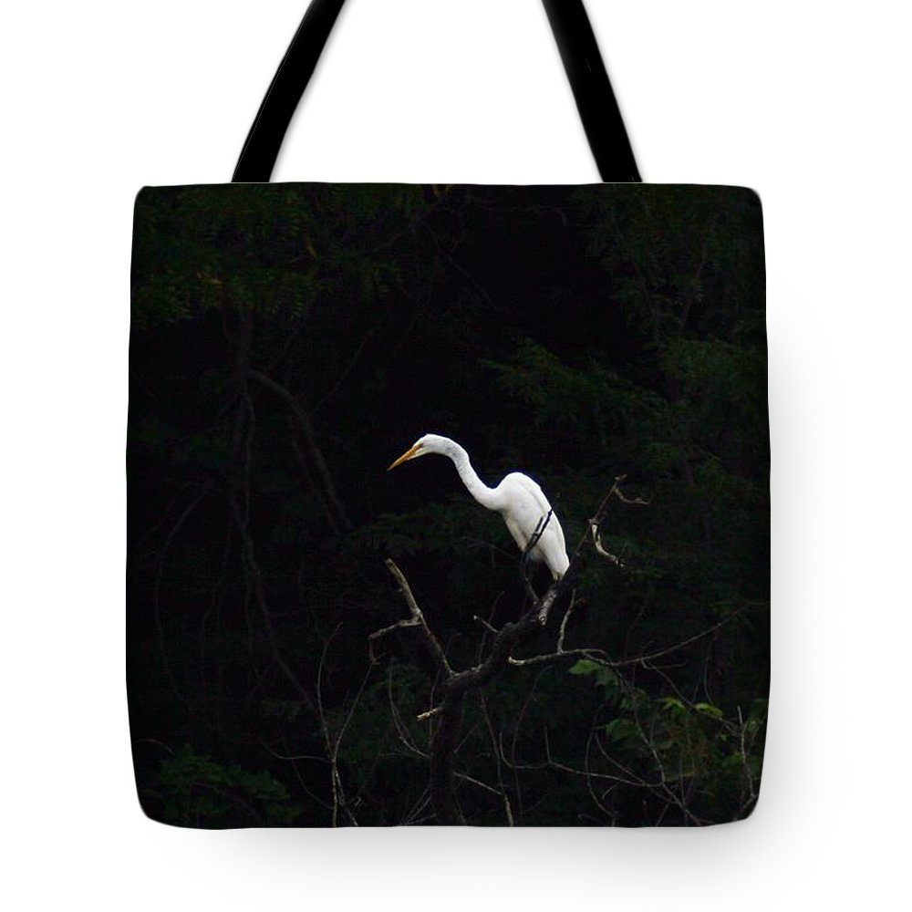 Nature Tote Bag featuring the photograph White Egret by Lew Wescott