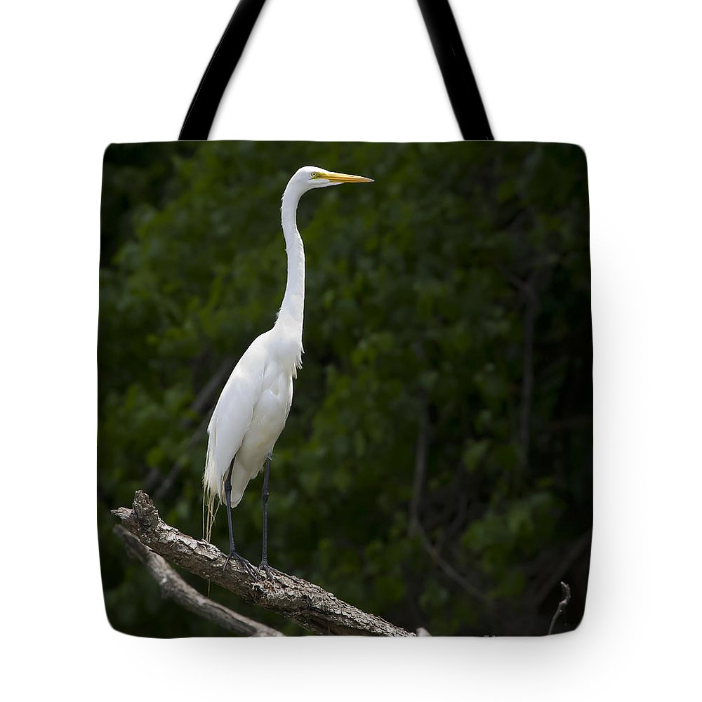 Bird Tote Bag featuring the photograph White Egret-signed-#0493 by J L Woody Wooden