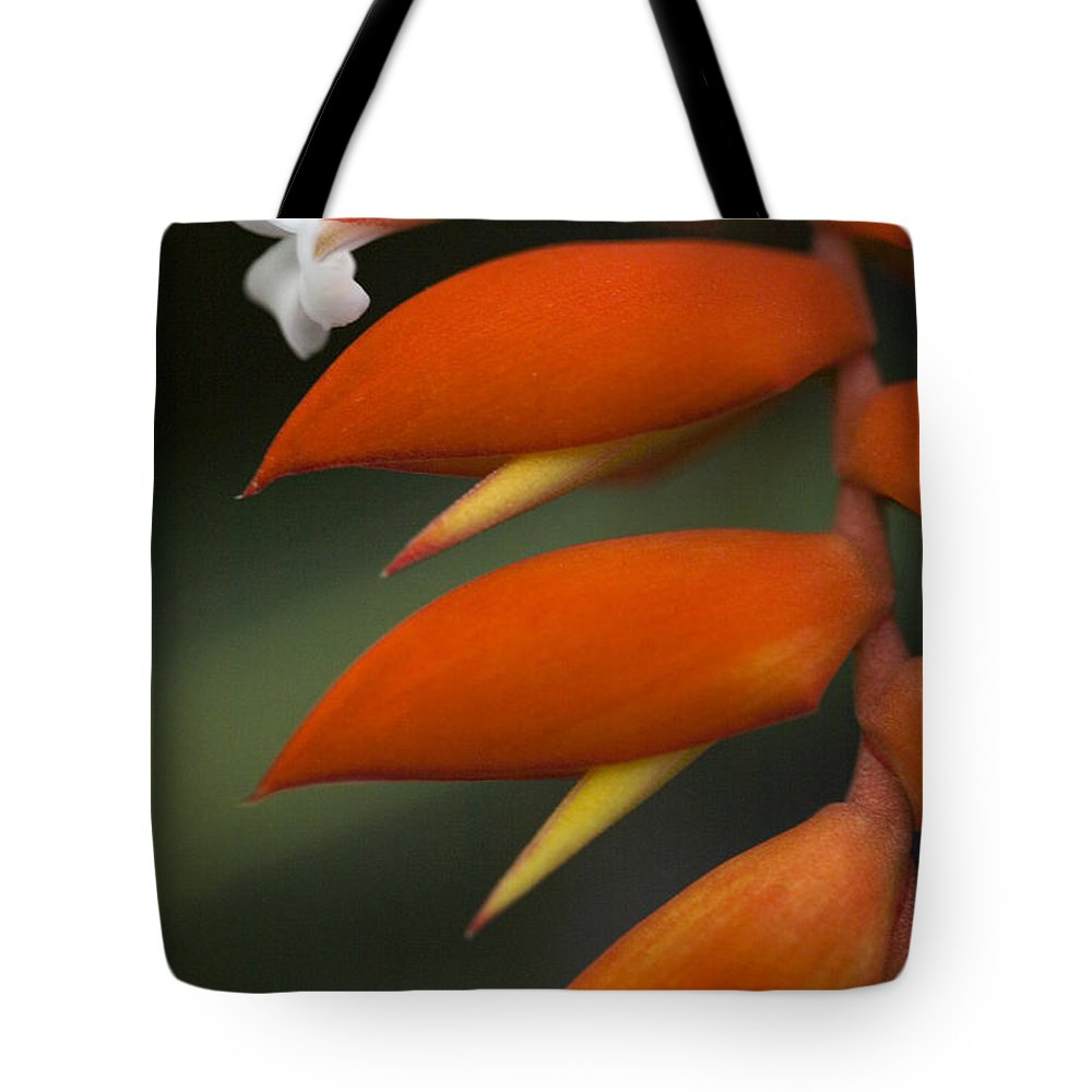 Heliconia Tote Bag featuring the photograph White Flower And Orange by Karen Ulvestad