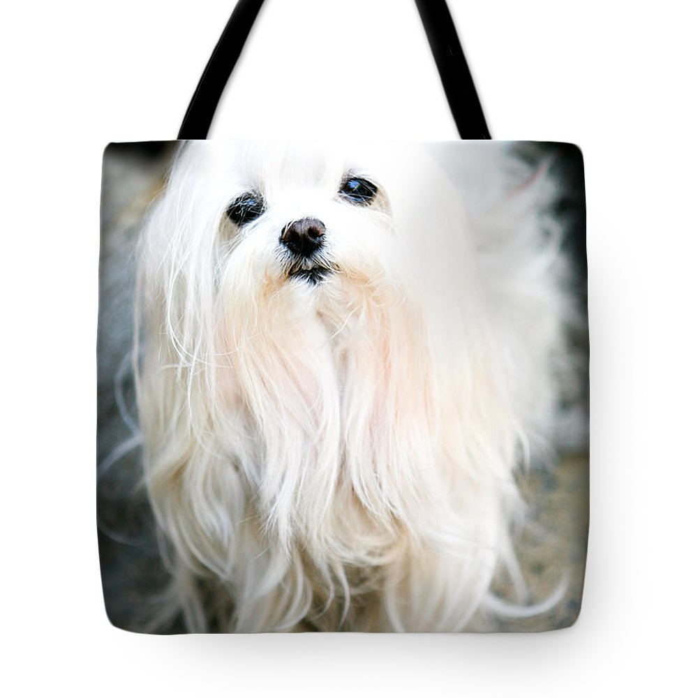 Small Tote Bag featuring the photograph White Fluff by Marilyn Hunt