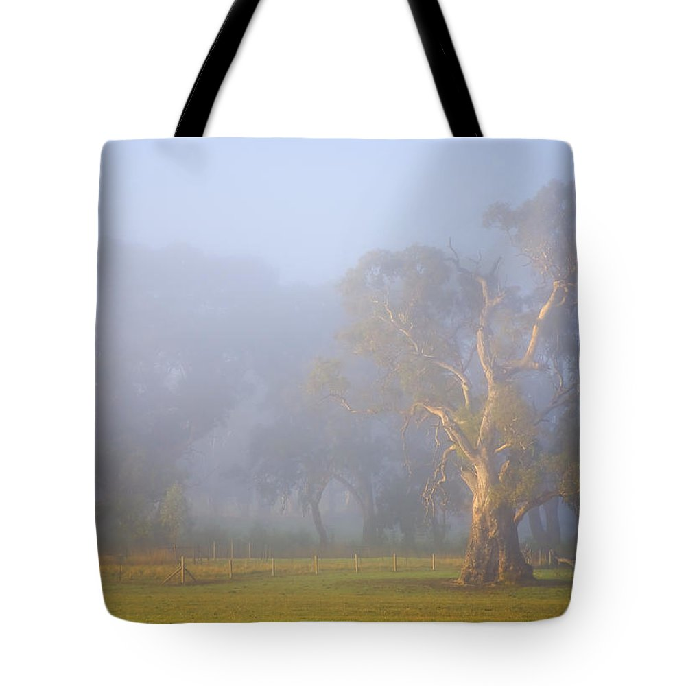 Tree Tote Bag featuring the photograph White Gum Morning by Mike Dawson