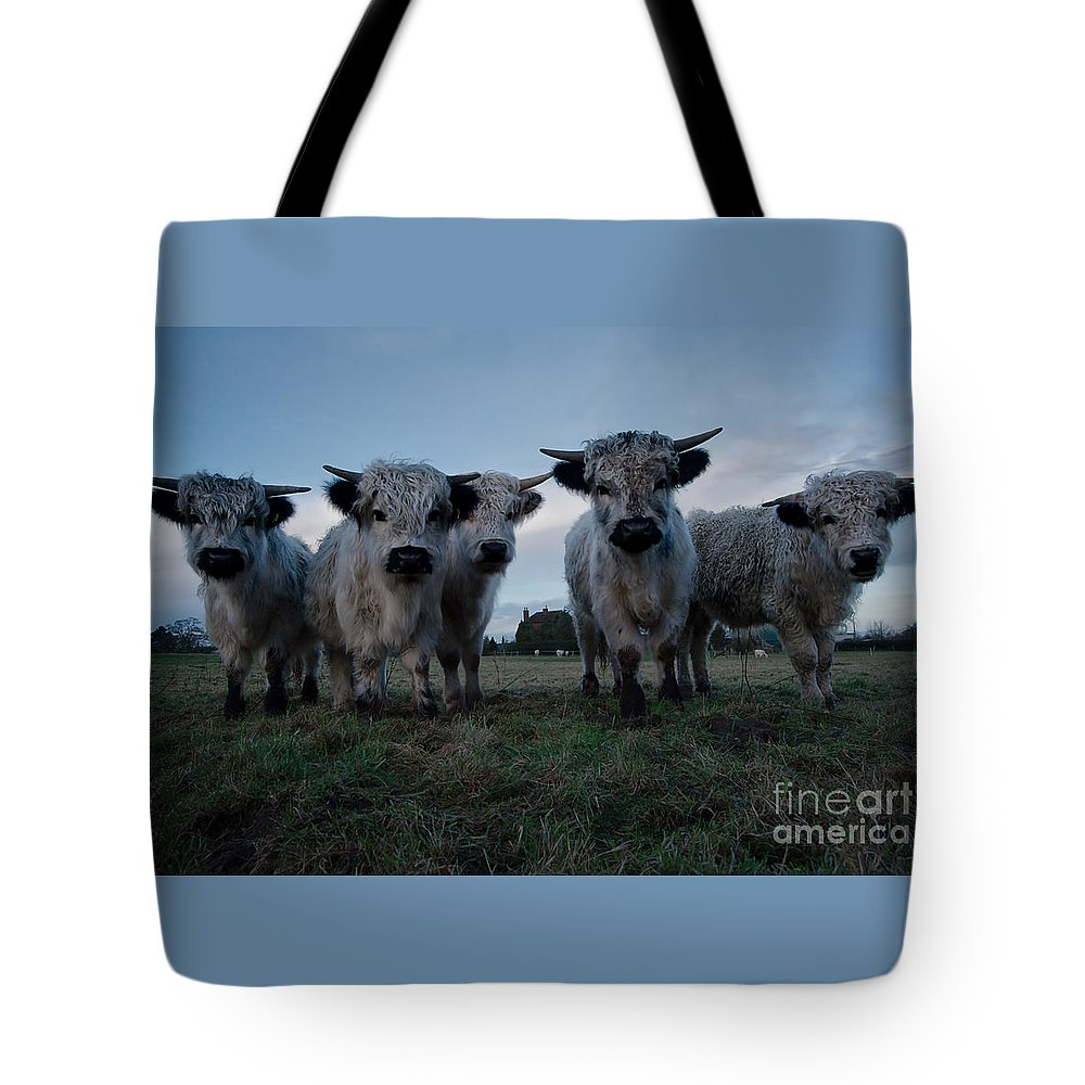 Animal Tote Bag featuring the photograph White High Park Cow Herd by Rawshutterbug