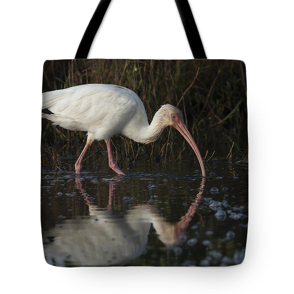 American Tote Bag featuring the photograph White Ibis Feeding In Morning Light by David Watkins