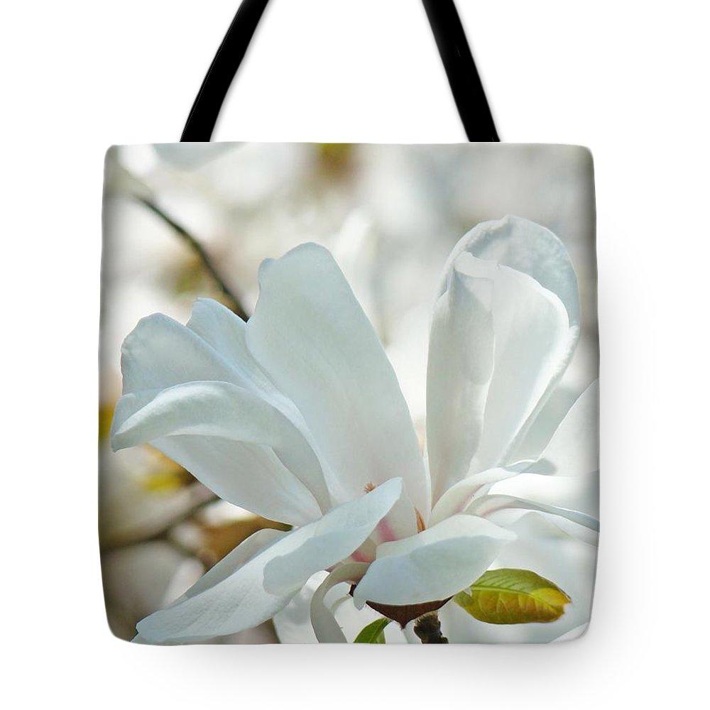 White Magnolia Tree Flower Art Prints Magnolias Baslee Troutman Tote