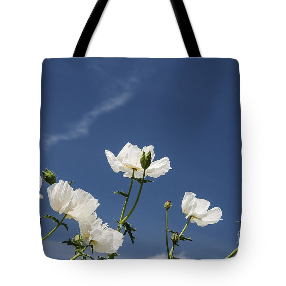 Fredericksburg Texas White Poppy Poppies Bloom Blooms Flower Flowers Spring Bud Buds Hill Country Tote Bag featuring the photograph White On Blue by Bob Phillips