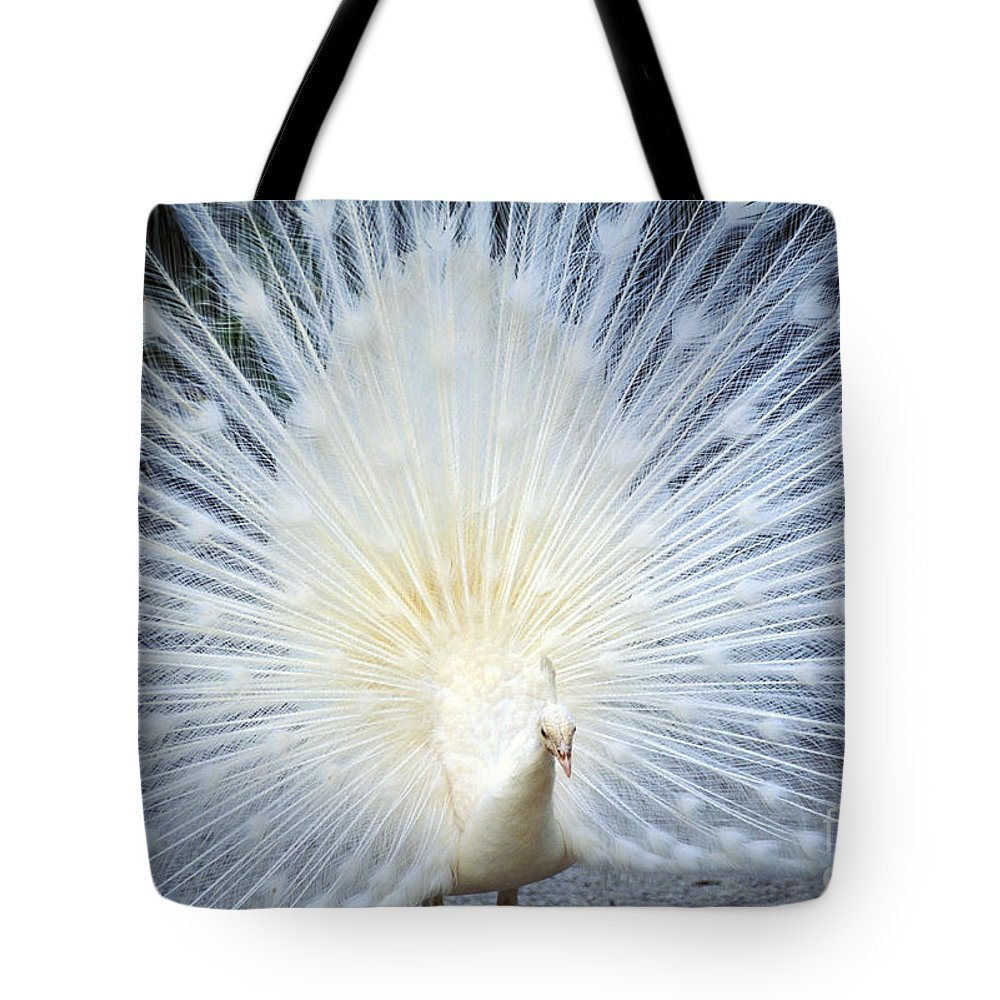 Albino Tote Bag featuring the photograph White Peacock by Rita Ariyoshi - Printscapes