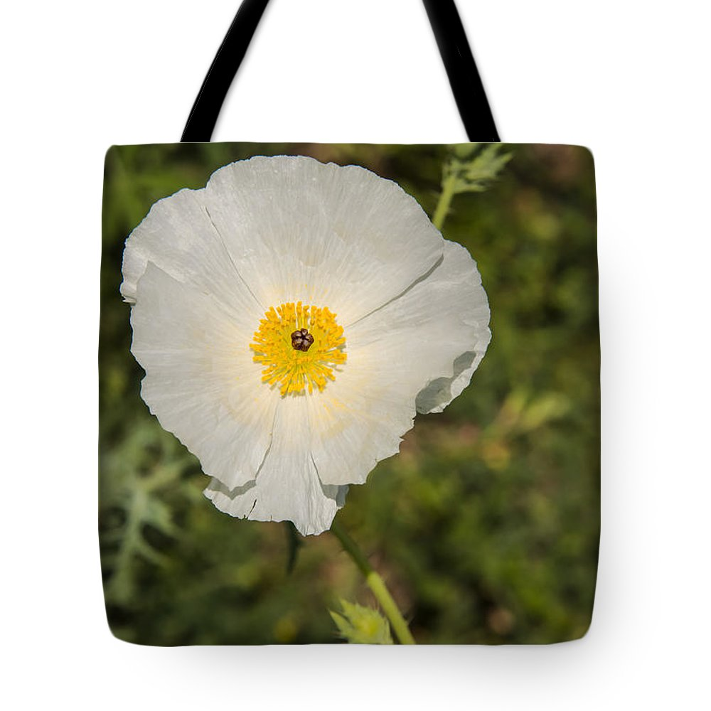 Fredericksburg Texas White Poppy Poppies Bloom Blooms Flower Flowers Spring Bud Buds Hill Country Tote Bag featuring the photograph White Poppy With Buds by Bob Phillips