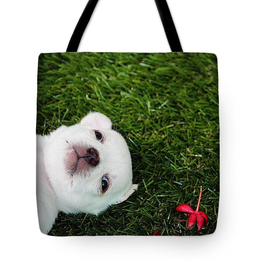 Dog Art Tote Bag featuring the painting White Puppy by Queso Espinosa
