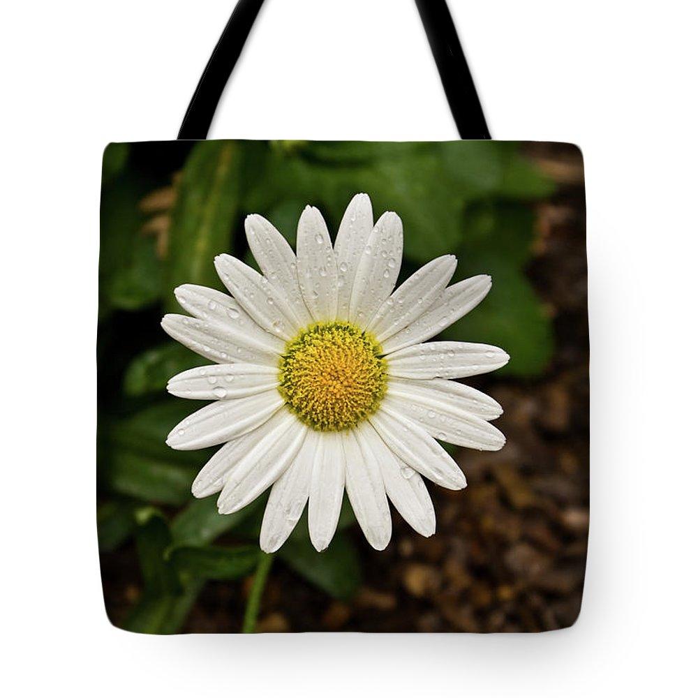 Cumberland Tote Bag featuring the photograph White Shasta Daisy In The Rain by Douglas Barnett
