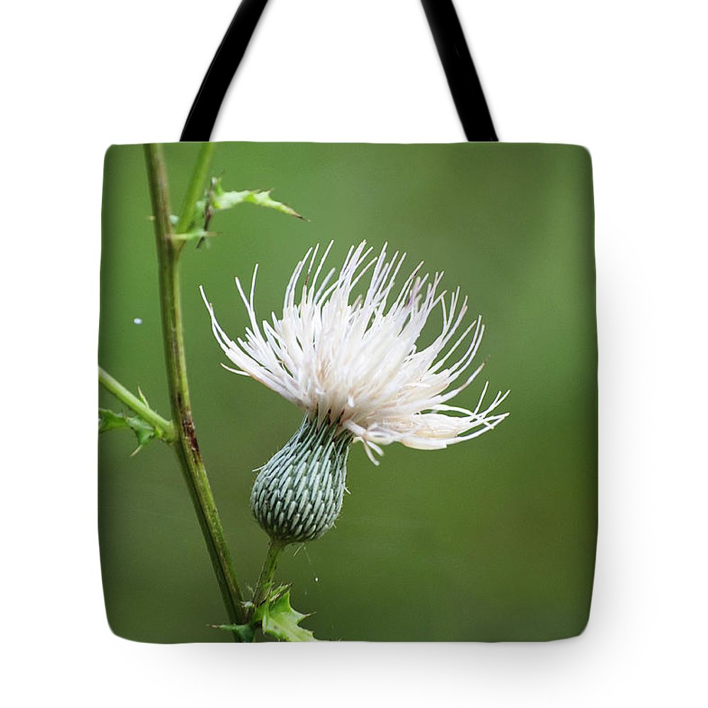 White Thistle Flower Tote Bag For Sale By Kenneth Albin