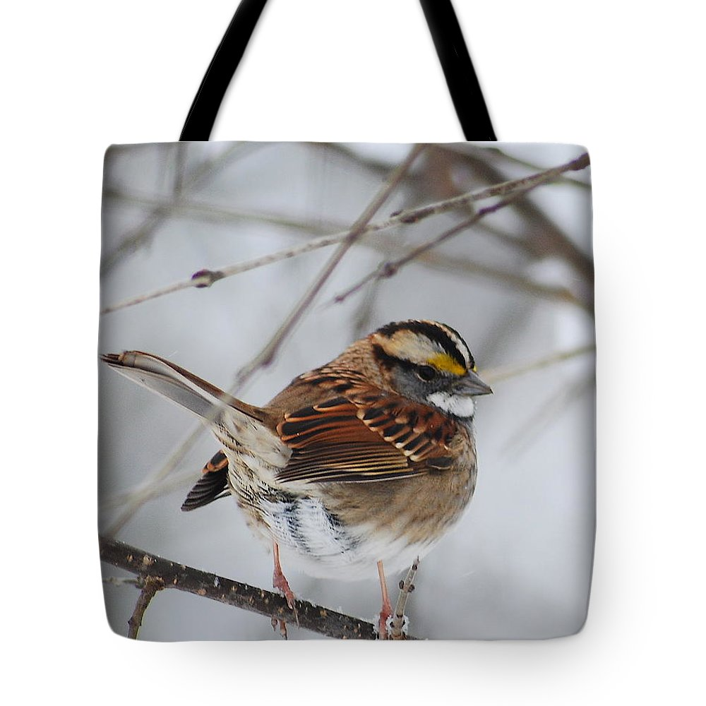 White-throated Sparrow Tote Bag featuring the photograph White Throated Sparrow 2 by Michael Peychich