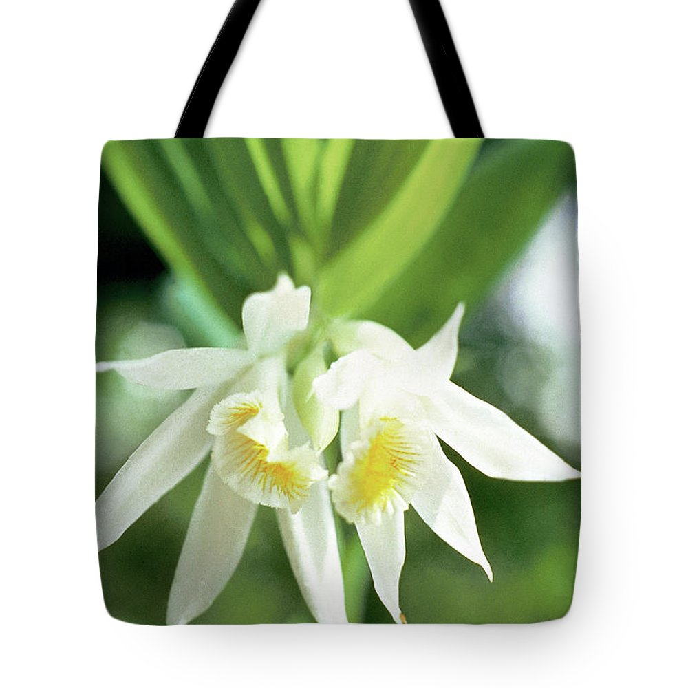 White Thunia Tote Bag featuring the photograph White Thunia by Indian School