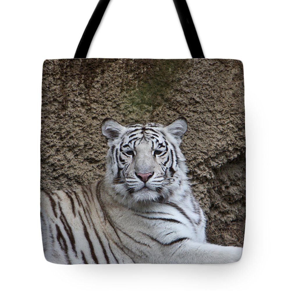 White Tote Bag featuring the photograph White Tiger Resting by Douglas Barnett