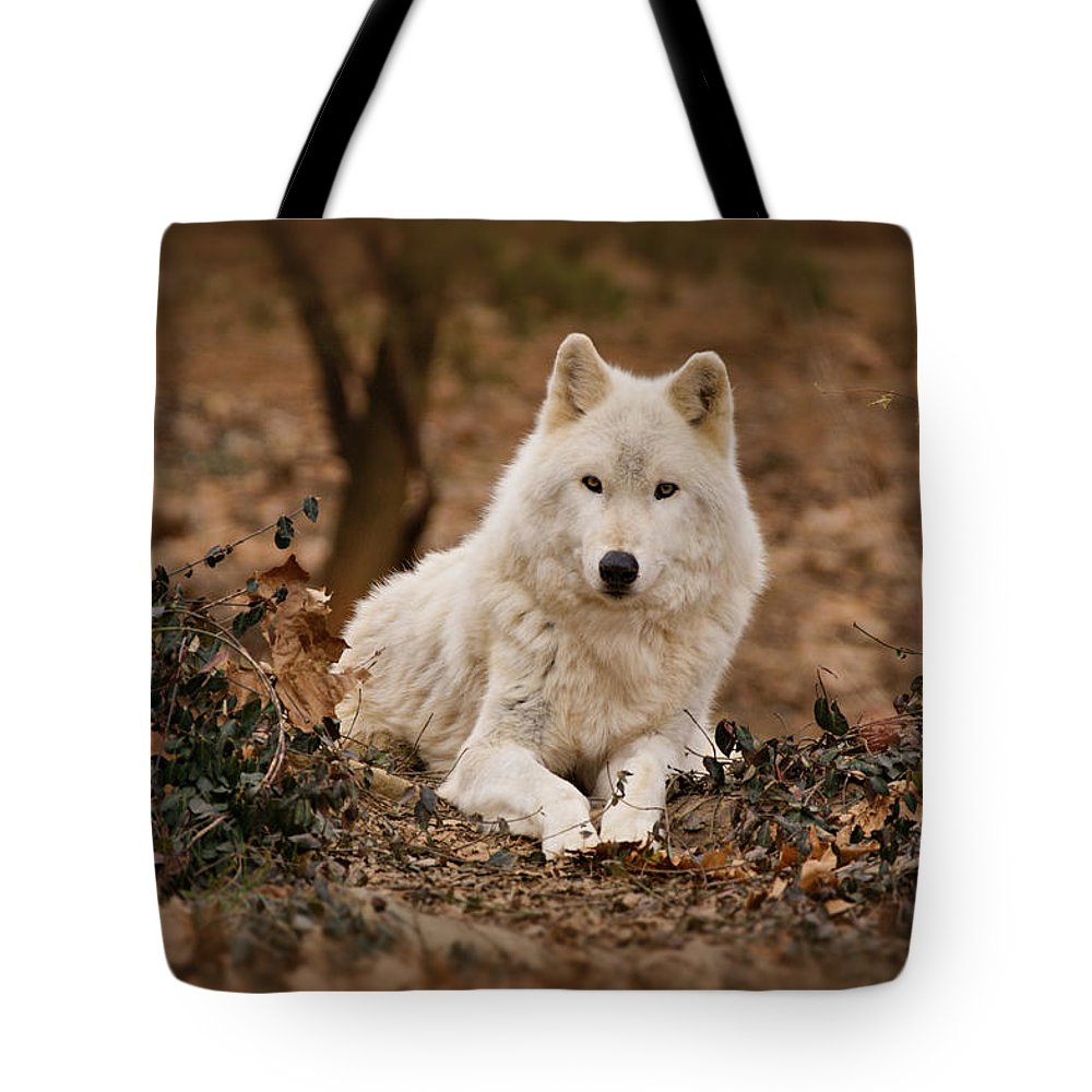 Wolf Tote Bag featuring the photograph White Wolf by Sandy Keeton