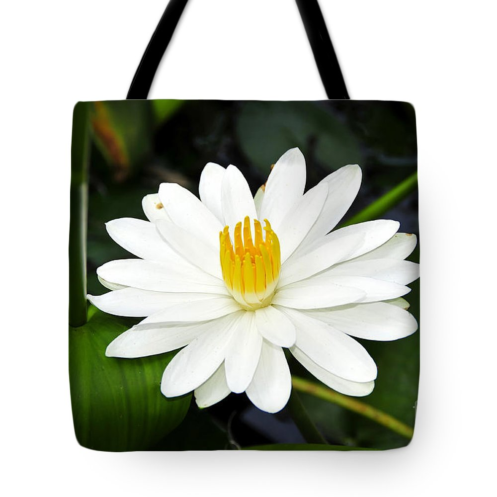 White Tote Bag featuring the photograph White Wonder by David Lee Thompson